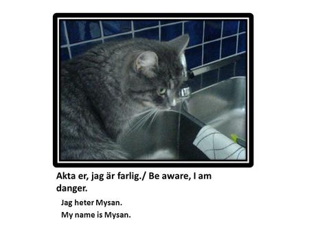 Akta er, jag är farlig./ Be aware, I am danger. Jag heter Mysan. My name is Mysan.