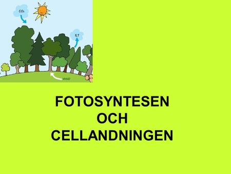 FOTOSYNTESEN OCH CELLANDNINGEN