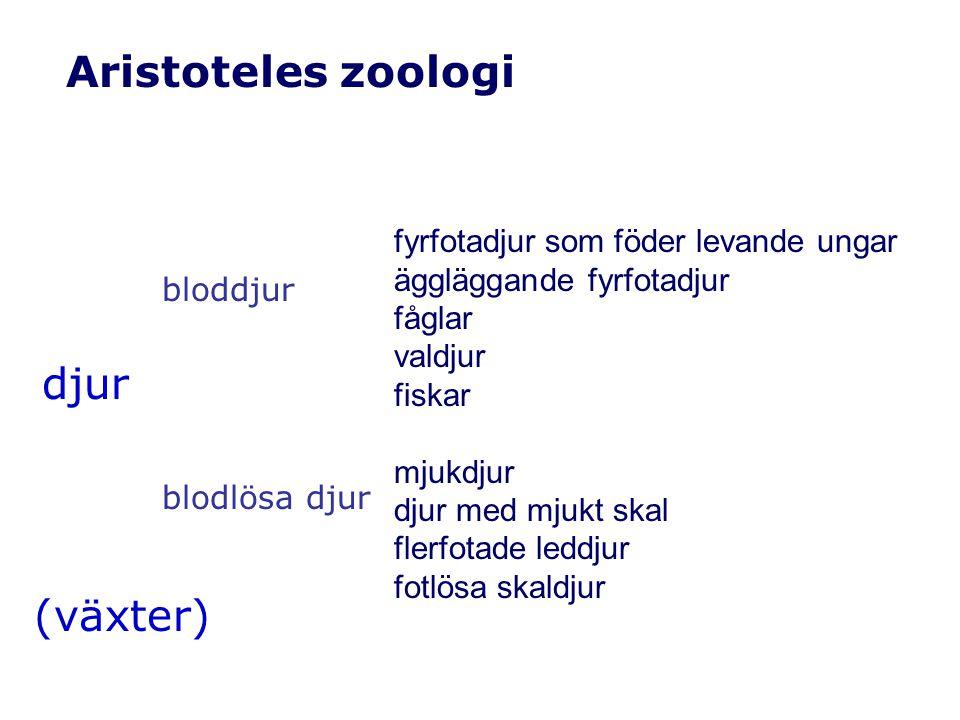 Aristoteles zoologi djur (växter) bloddjur blodlösa djur fyrfotadjur som föder levande ungar äggläggande fyrfotadjur fåglar valdjur fiskar mjukdjur djur med mjukt skal flerfotade leddjur fotlösa skaldjur