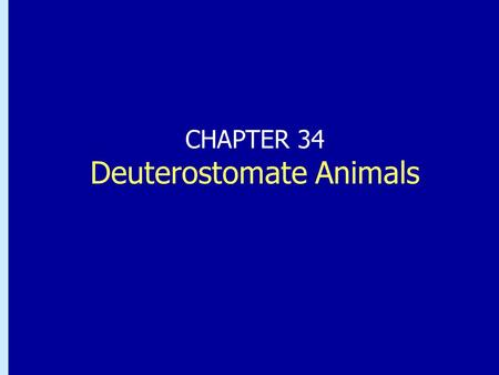 Chapter 33: Deuterostomate Animals CHAPTER 34 Deuterostomate Animals.