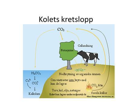 fotosyntes och cellandning enkel förklaring