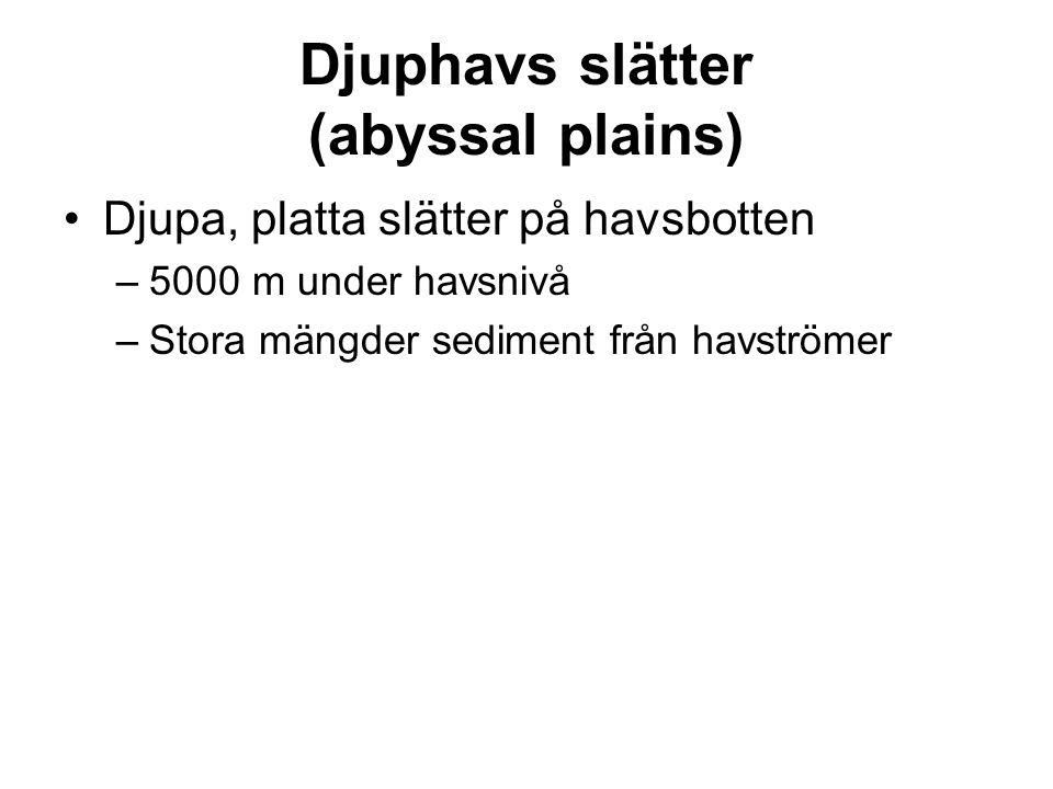 Djuphavs slätter (abyssal plains)