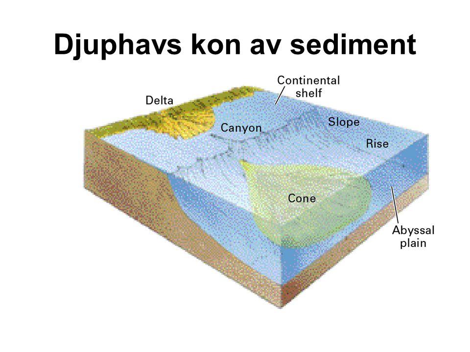 Djuphavs kon av sediment