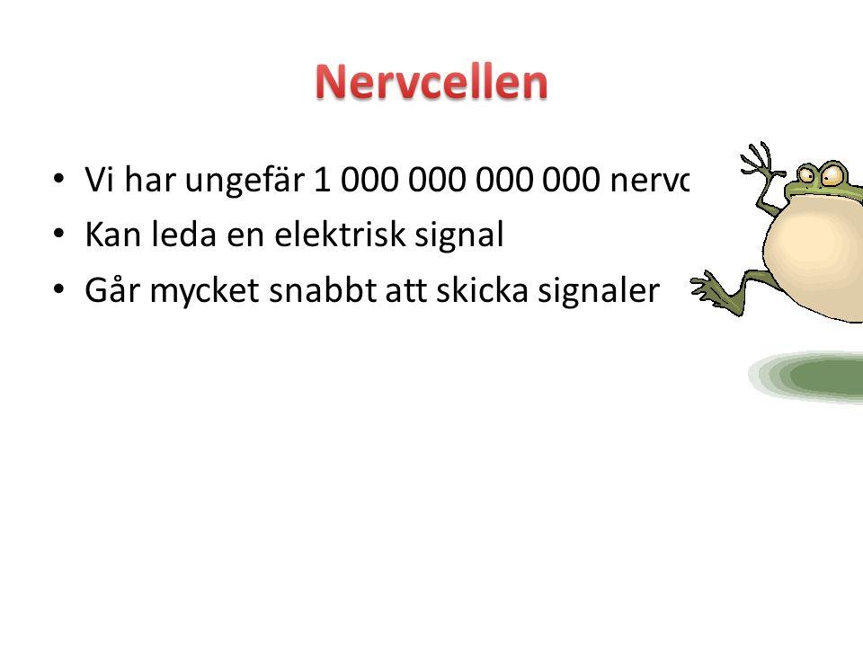 Nervcellen Vi har ungefär 1 000 000 000 000 nervceller