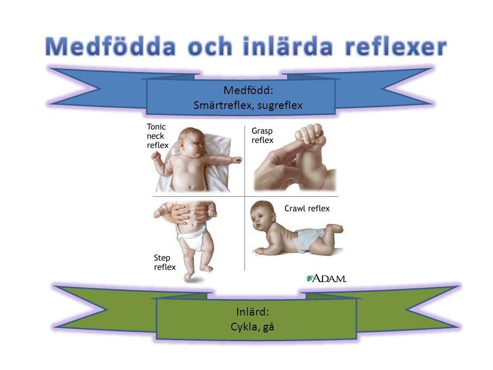 Medfödda och inlärda reflexer