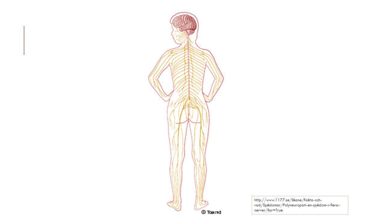 http://www.1177.se/Skane/Fakta-och-rad/Sjukdomar/Polyneuropati-en-sjukdom-i-flera-nerver/ ar=True