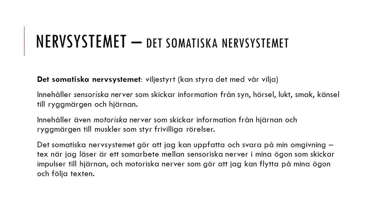 Nervsystemet – det somatiska nervsystemet