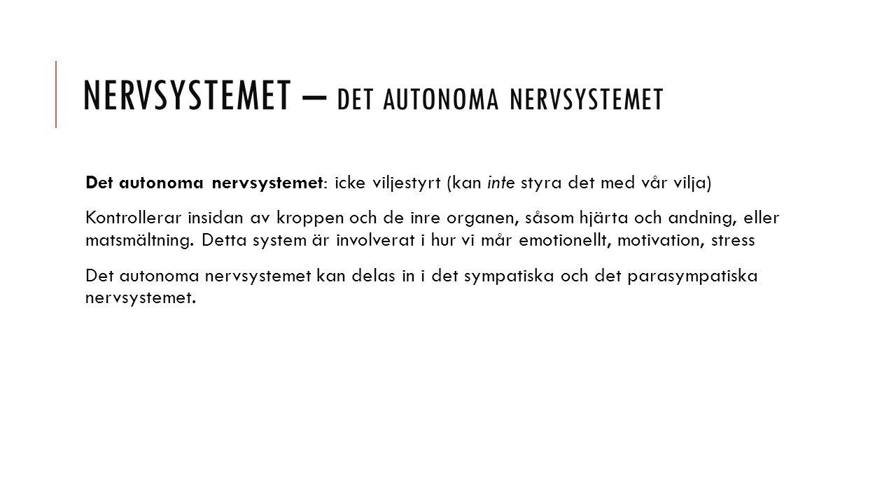 Nervsystemet – det autonoma nervsystemet