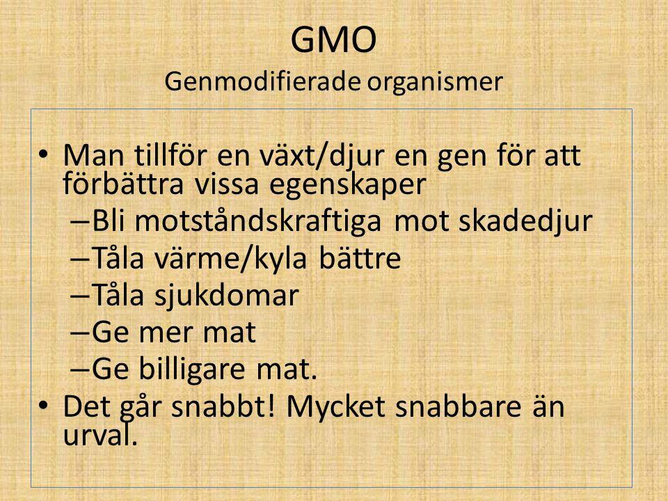 GMO Genmodifierade organismer