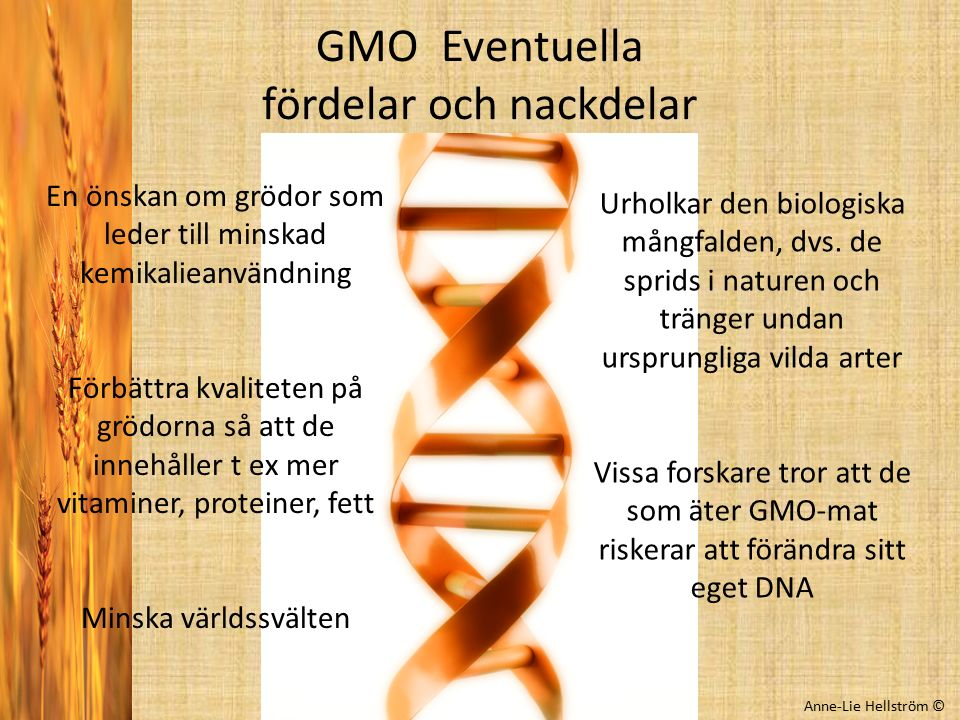 GMO Eventuella fördelar och nackdelar
