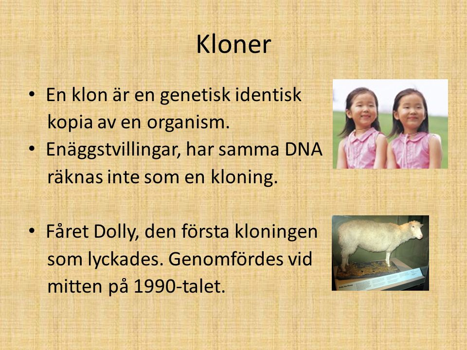 Kloner En klon är en genetisk identisk kopia av en organism.