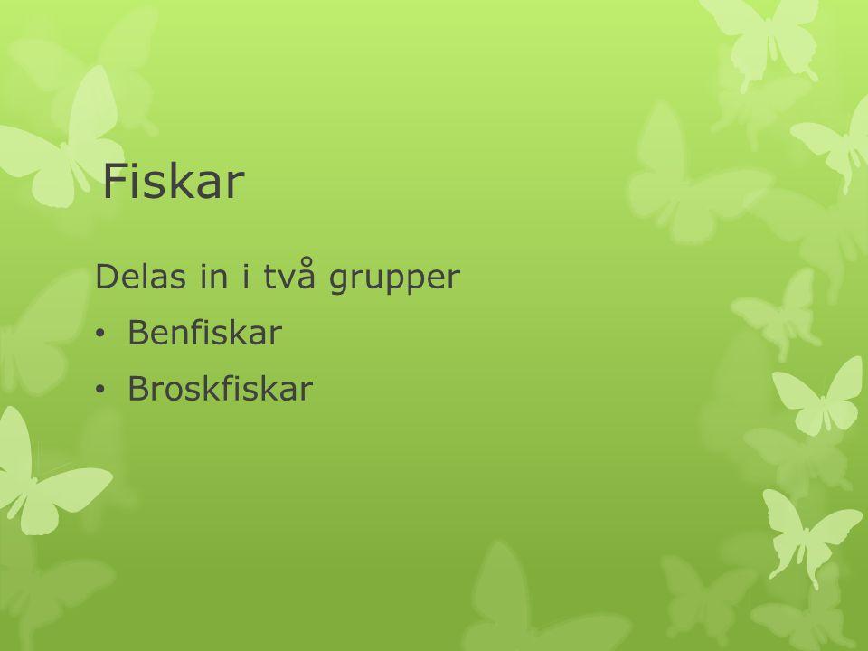 Delas in i två grupper Benfiskar Broskfiskar