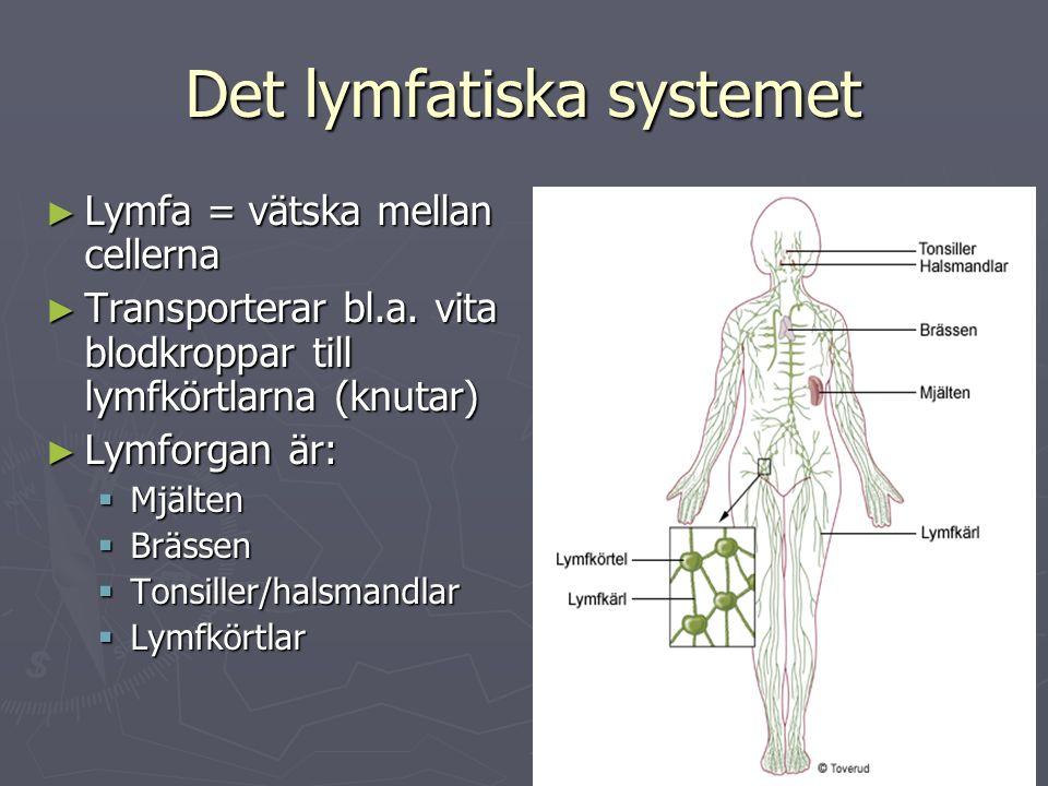 Det lymfatiska systemet