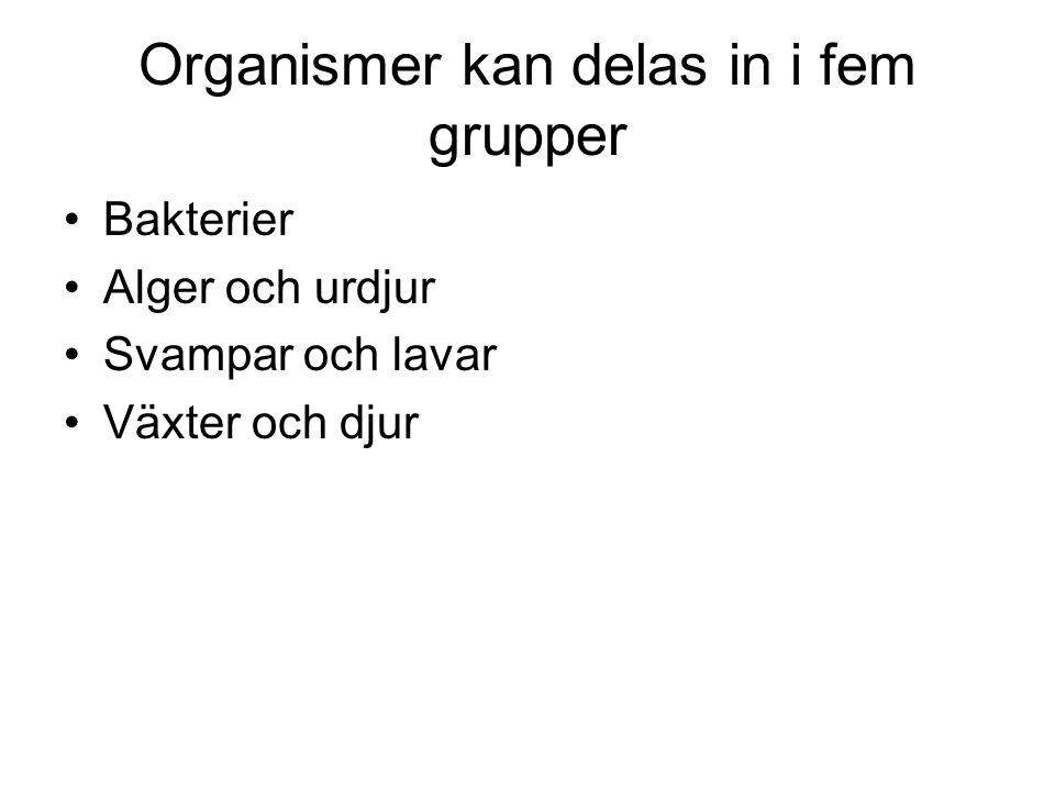 Organismer kan delas in i fem grupper