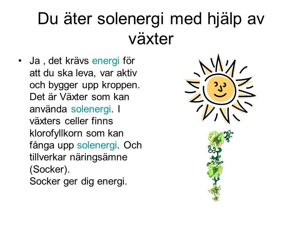 Du äter solenergi med hjälp av växter