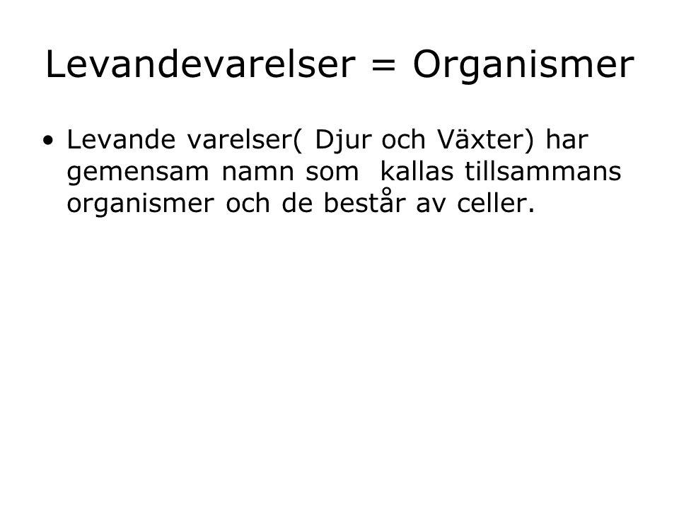Levandevarelser = Organismer
