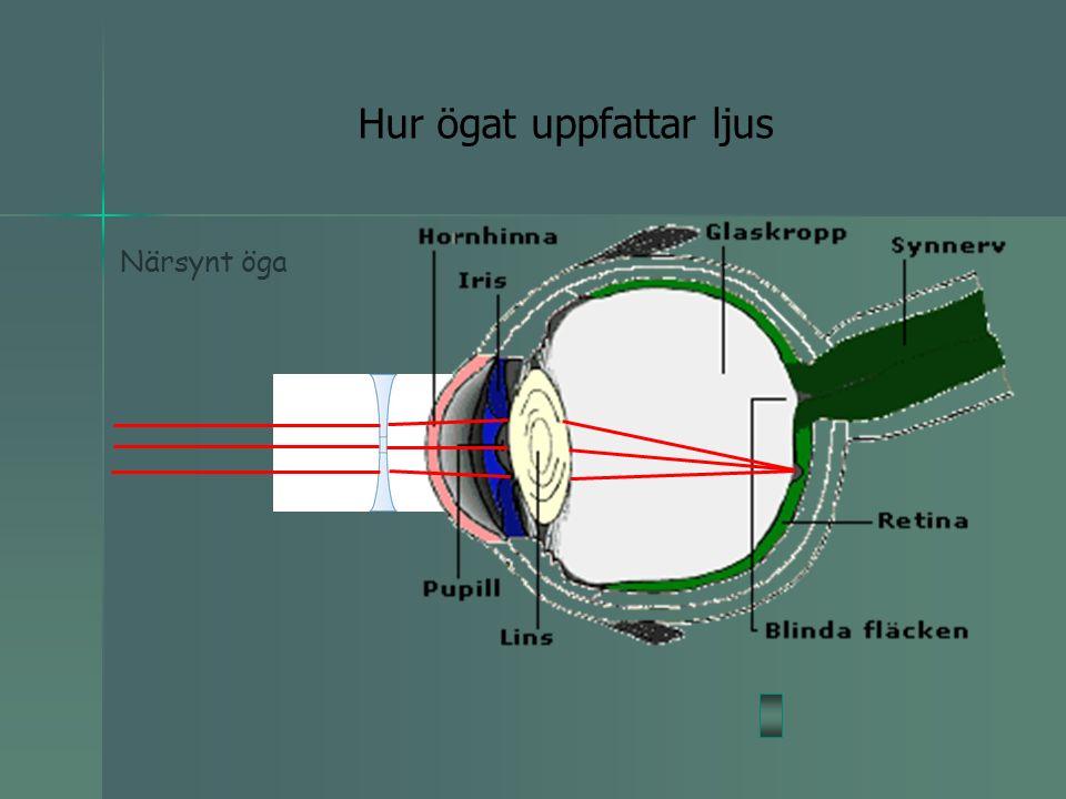 Hur ögat uppfattar ljus