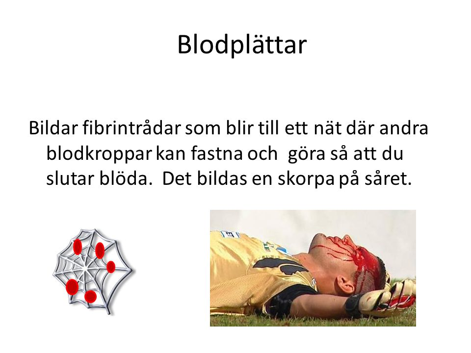 Blodplättar