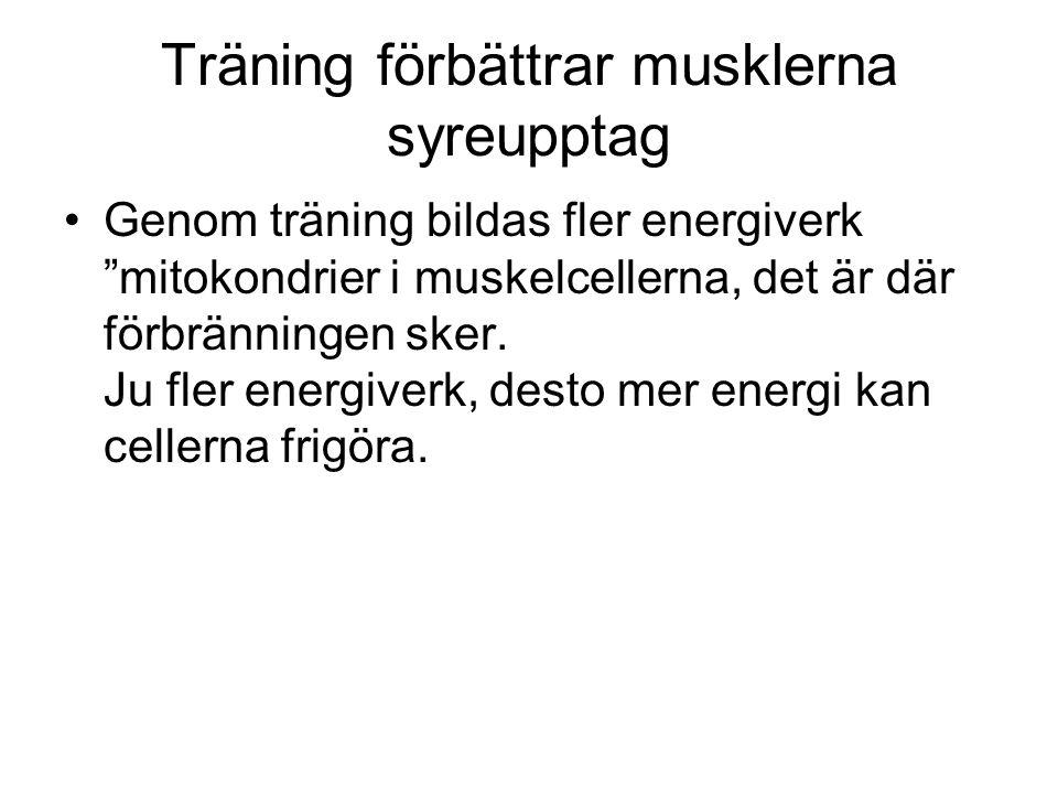 Träning förbättrar musklerna syreupptag