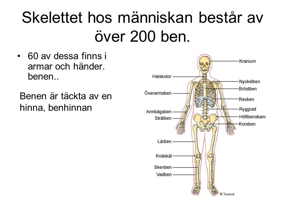 Skelettet hos människan består av över 200 ben.