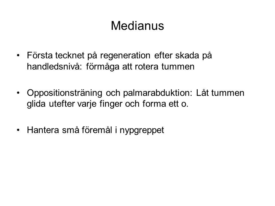 Medianus Första tecknet på regeneration efter skada på handledsnivå: förmåga att rotera tummen.