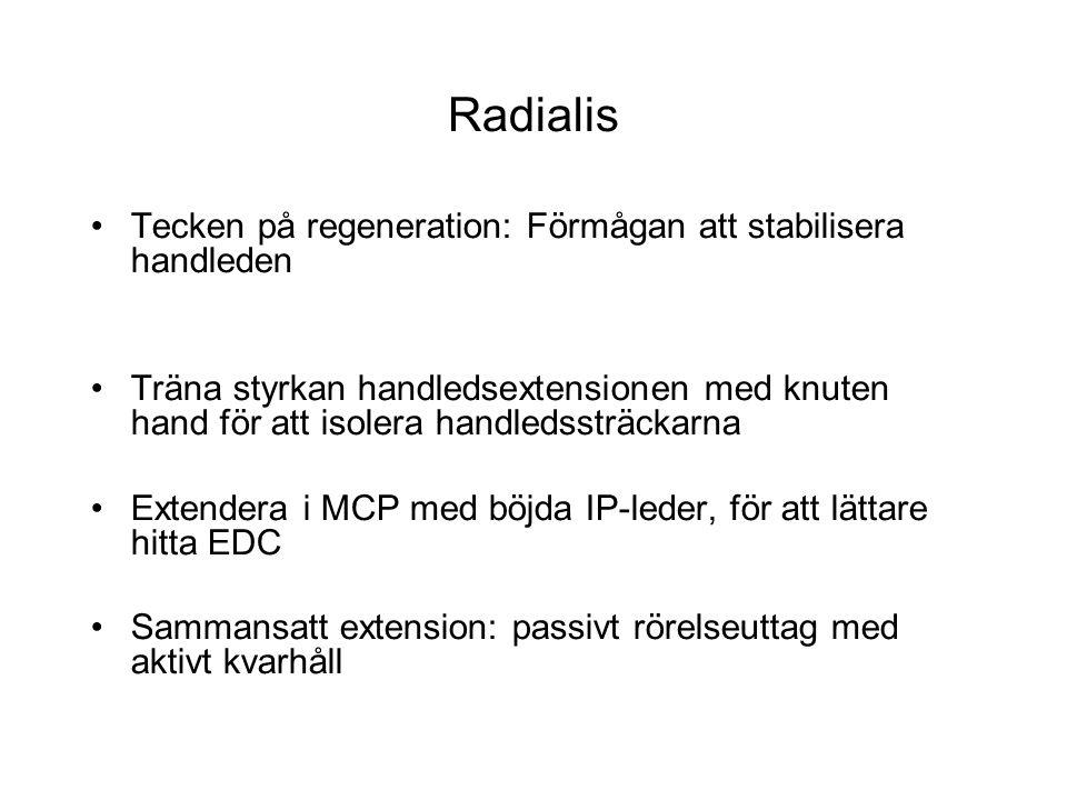 Radialis Tecken på regeneration: Förmågan att stabilisera handleden