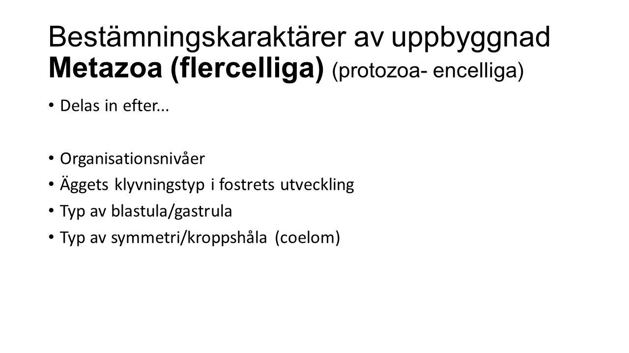 Bestämningskaraktärer av uppbyggnad Metazoa (flercelliga) (protozoa- encelliga)
