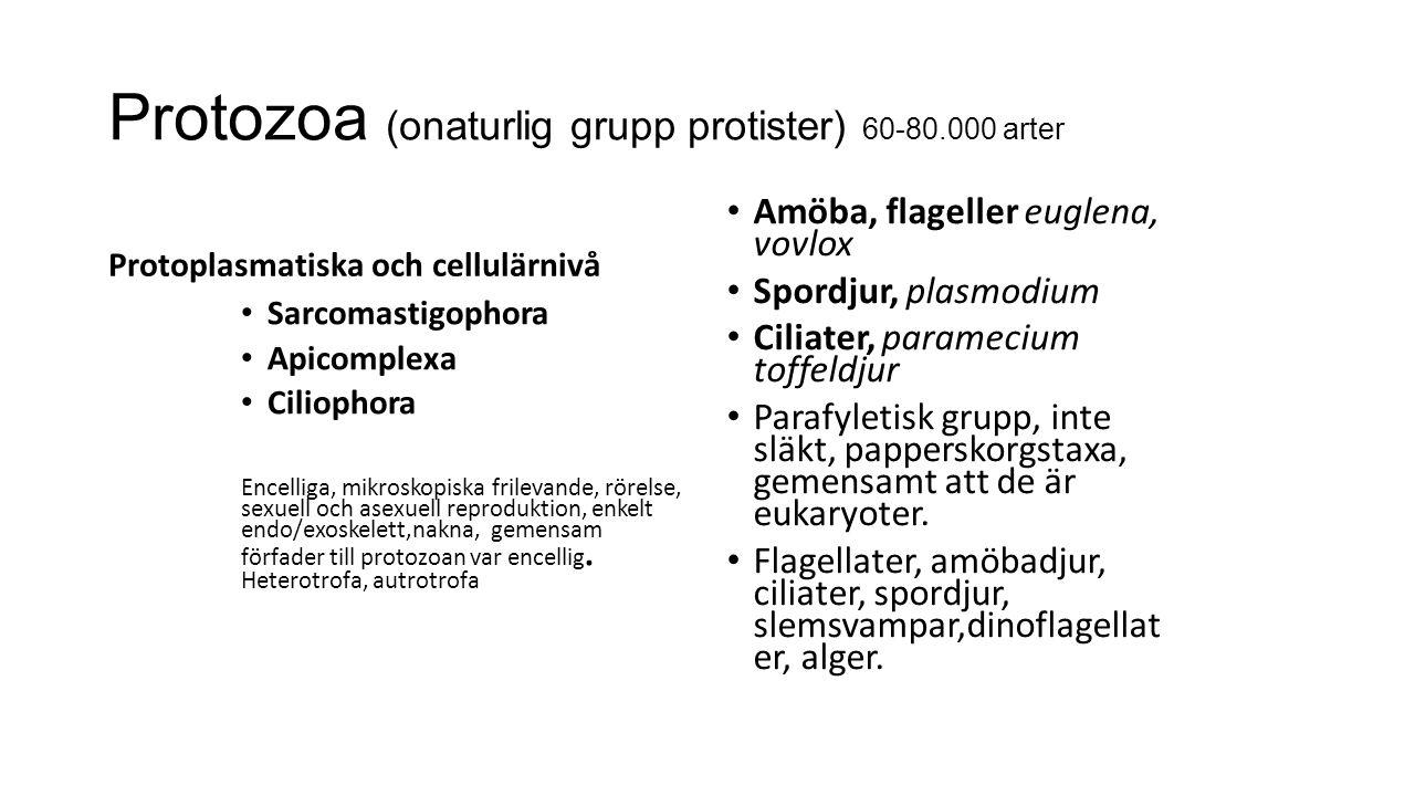Protozoa (onaturlig grupp protister) 60-80.000 arter