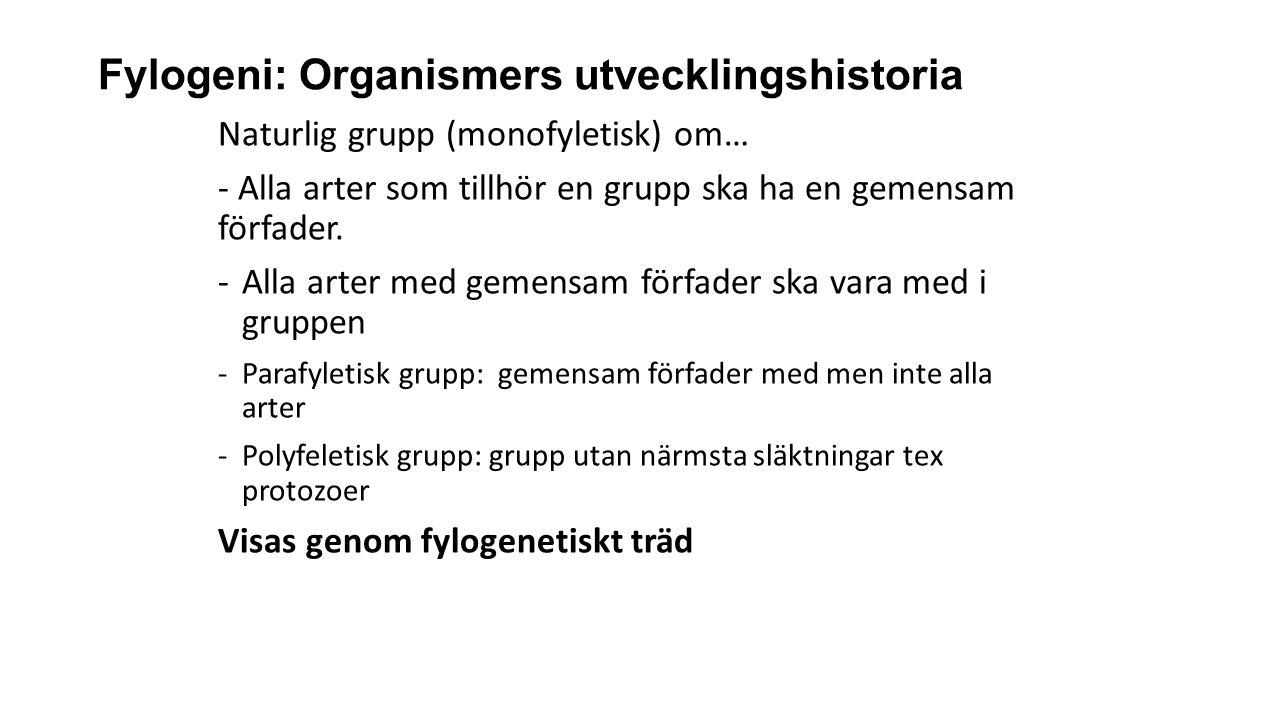 Fylogeni: Organismers utvecklingshistoria