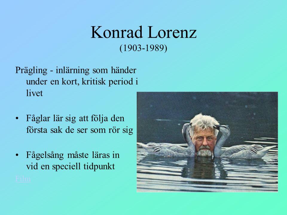 Konrad Lorenz (1903-1989) Prägling - inlärning som händer under en kort, kritisk period i livet.