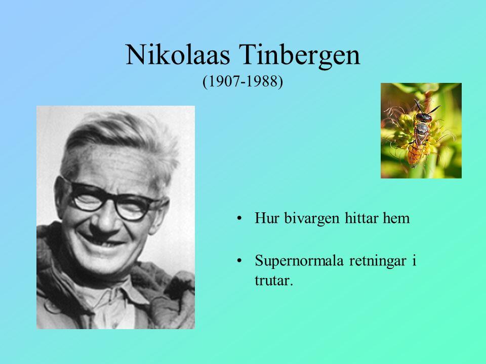 Nikolaas Tinbergen (1907-1988)