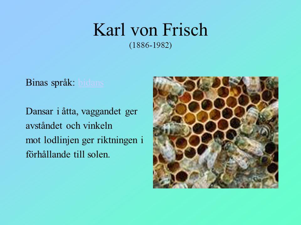 Karl von Frisch (1886-1982) Binas språk: bidans