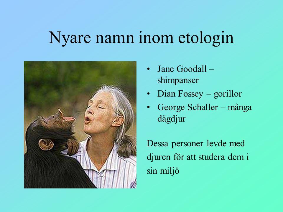 Nyare namn inom etologin