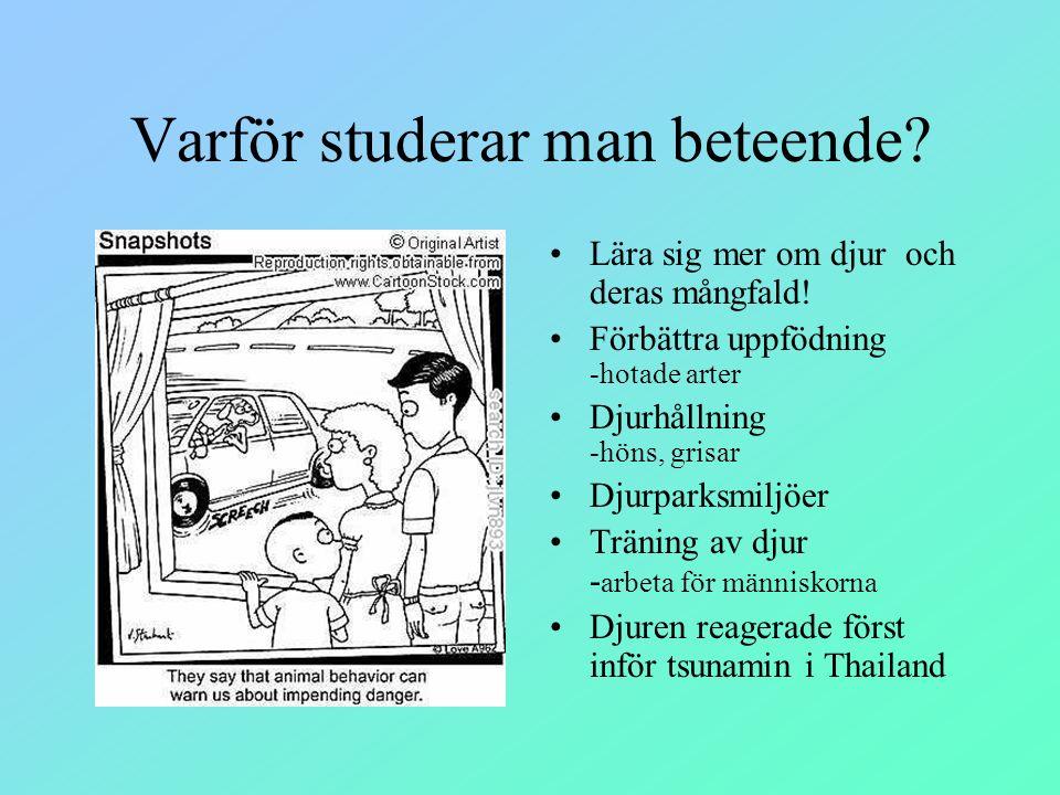 Varför studerar man beteende