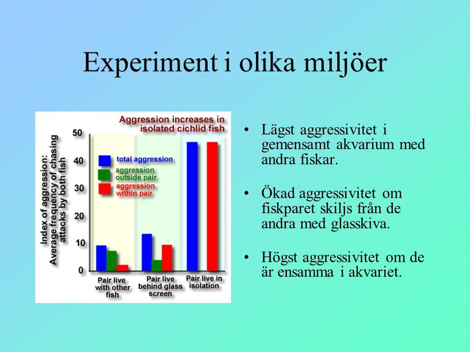 Experiment i olika miljöer