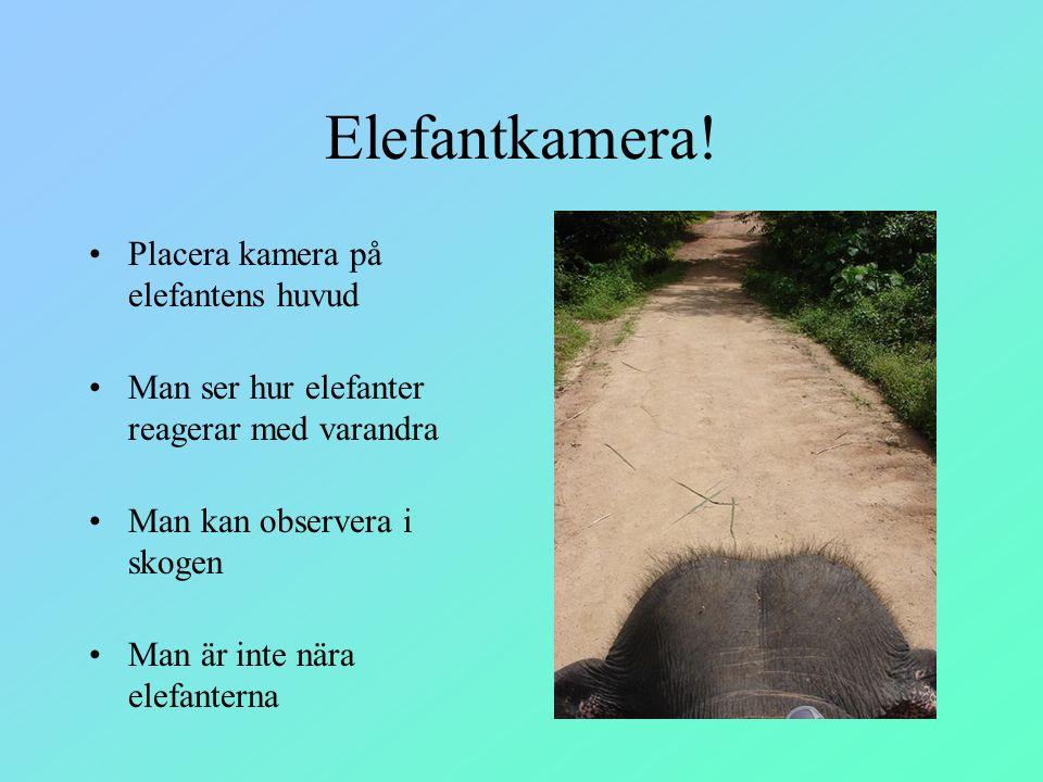 Elefantkamera! Placera kamera på elefantens huvud