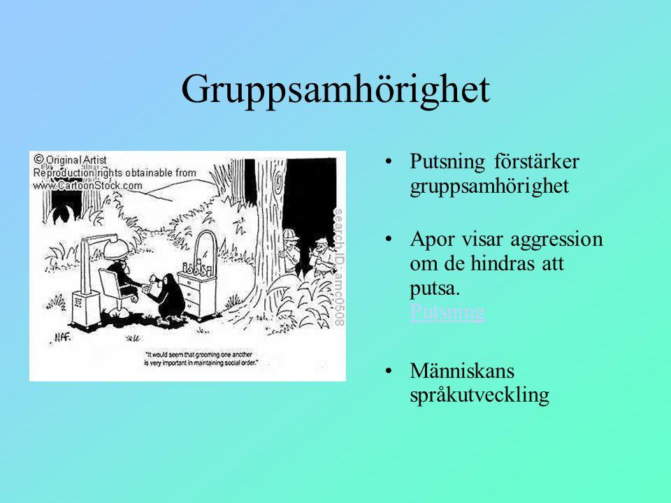 Gruppsamhörighet Putsning förstärker gruppsamhörighet