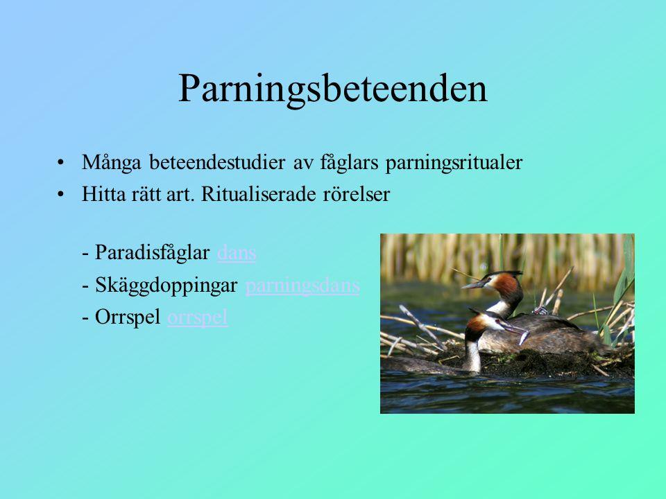 Parningsbeteenden Många beteendestudier av fåglars parningsritualer