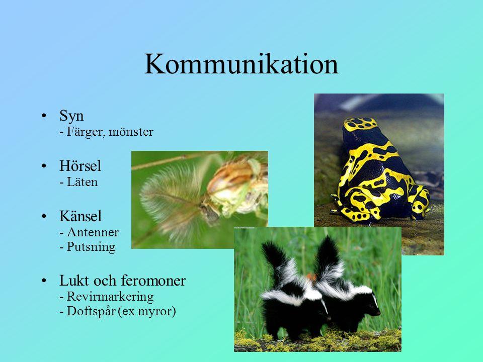 Kommunikation Syn - Färger, mönster Hörsel - Läten