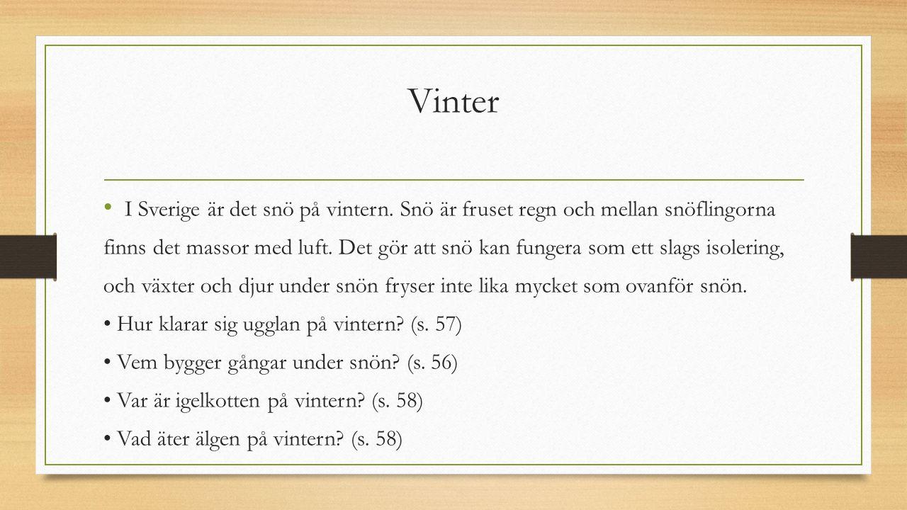 Vinter I Sverige är det snö på vintern. Snö är fruset regn och mellan snöflingorna.