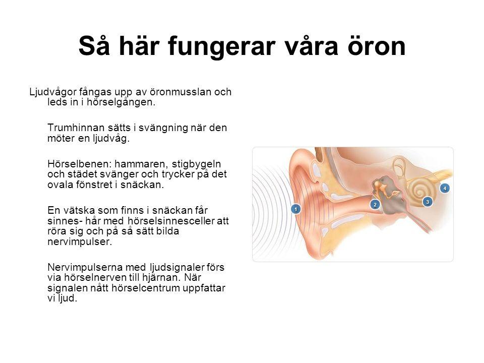 Så här fungerar våra öron