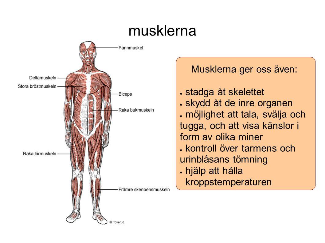 Musklerna ger oss även:
