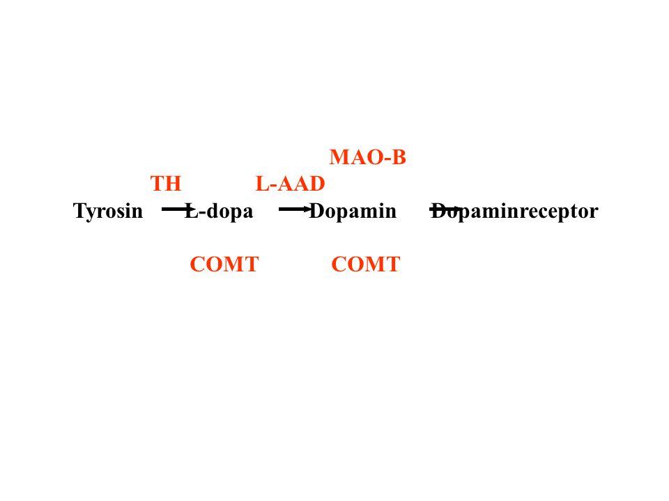 MAO-B TH L-AAD. Tyrosin L-dopa Dopamin Dopaminreceptor.