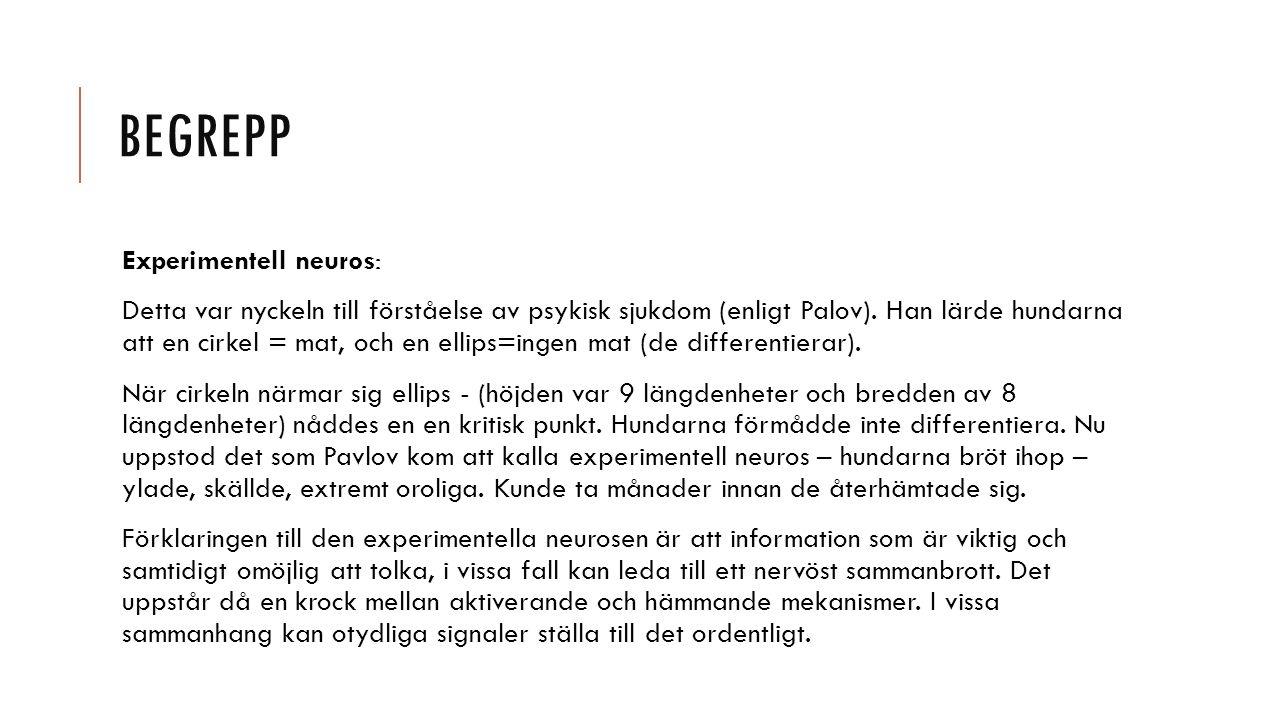 Begrepp Experimentell neuros: