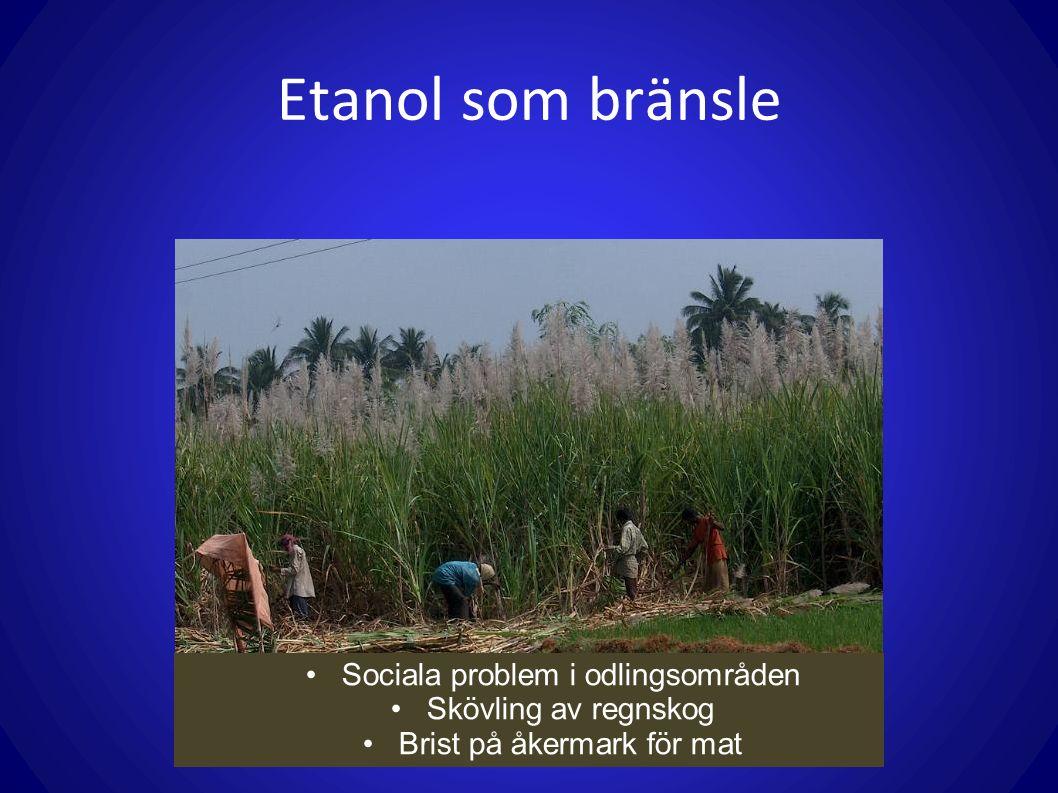 Etanol som bränsle Sociala problem i odlingsområden