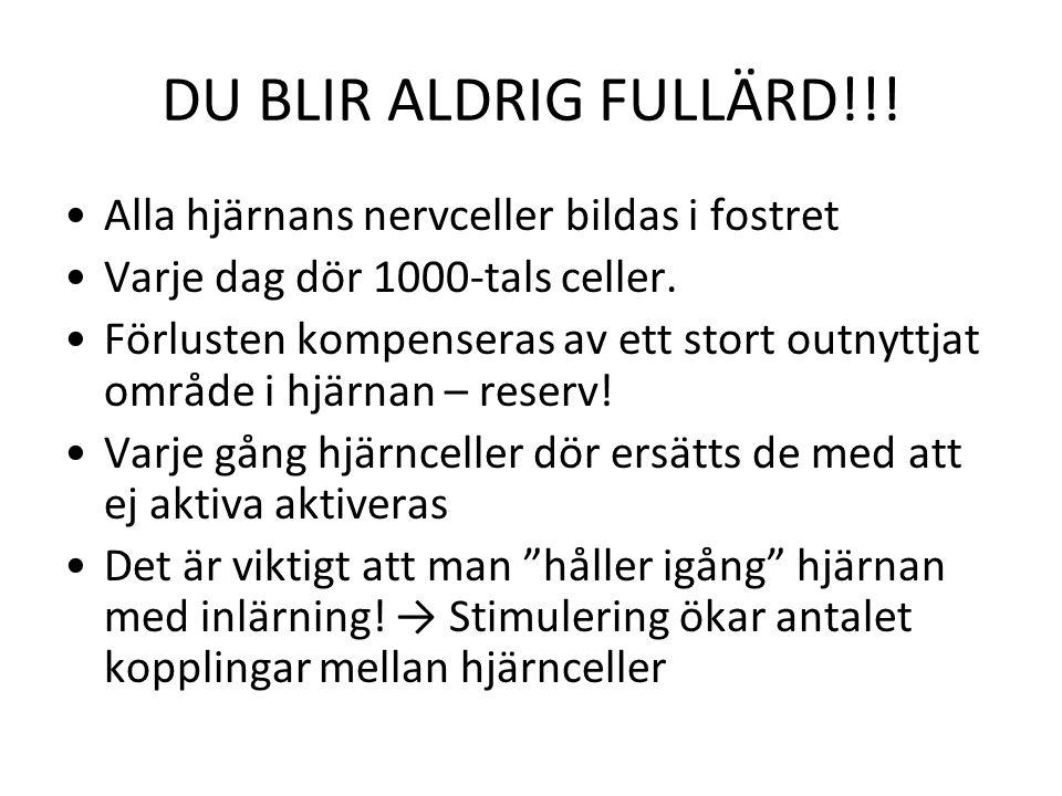 DU BLIR ALDRIG FULLÄRD!!! Alla hjärnans nervceller bildas i fostret
