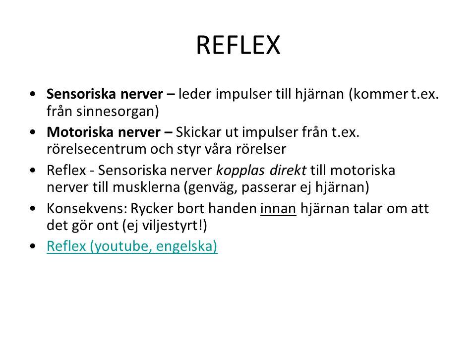 REFLEX Sensoriska nerver – leder impulser till hjärnan (kommer t.ex. från sinnesorgan)