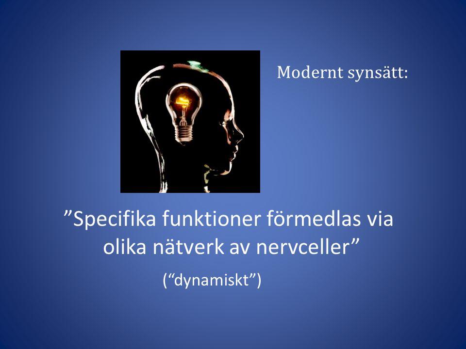 Specifika funktioner förmedlas via olika nätverk av nervceller