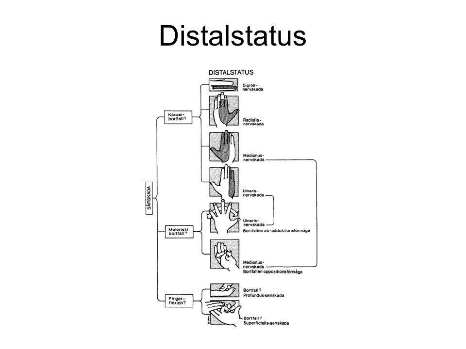 Distalstatus