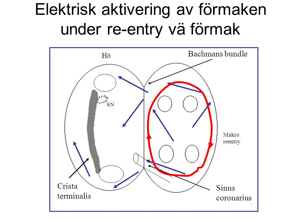 Elektrisk aktivering av förmaken under re-entry vä förmak